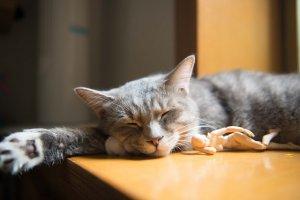 ぐっすり眠れるって幸せ